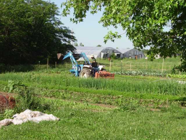 Mac tilling under cover crop for squash planting