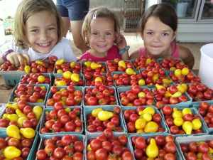 fresh cherry tomatoes and the girls who love them