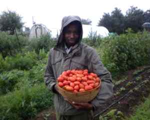 Kevin with Juliets (tomatoes)