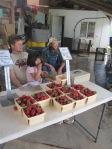 Strawberries for fruit share