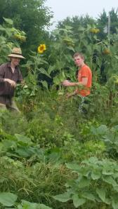 pickingbeans