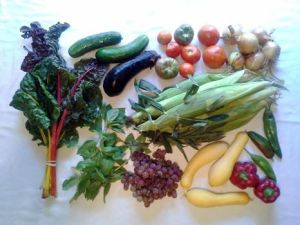 Today's Millsap Farms' CSA Delivery is EXCELLENT! Today we got Delicious Grapes, Basil, Swiss Chard, Cucumbers, Japanese Eggplant, Tomatoes, Onions, Hot Peppers, Red Peppers, Sweet Corn, and Yellow Squash. It's the best time of the summer!. Full Share with Fruit
